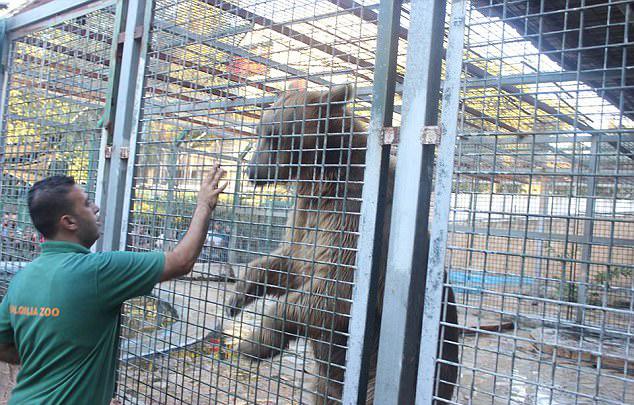 巴勒斯坦9岁男孩动物园喂熊时被咬断胳膊